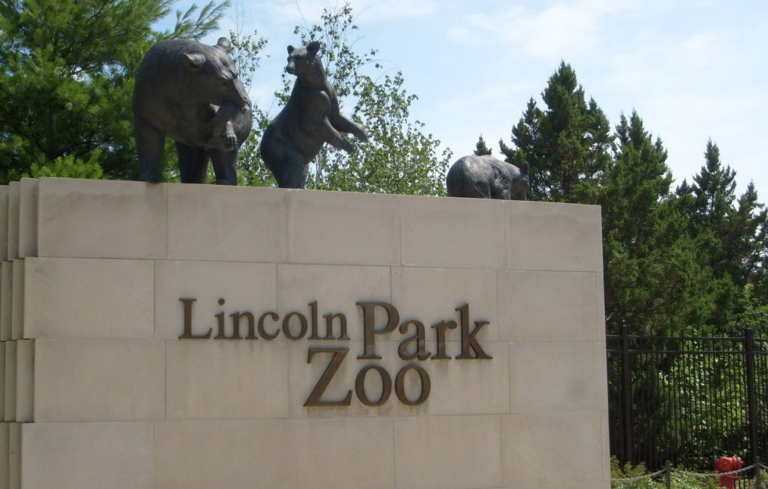 Baby Gizmo Visits the Lincoln Park Zoo (VIDEO)