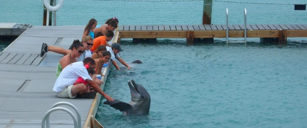 hawks dolphin Hawks Cay Resort Review