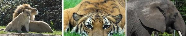Virginia Zoos