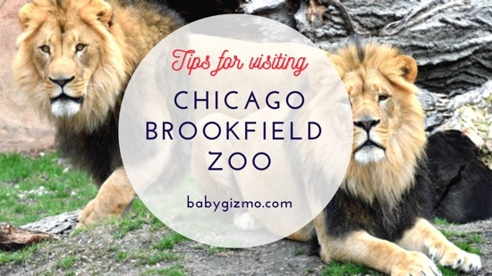 Baby Gizmo Visits the Chicago Brookfield Zoo
