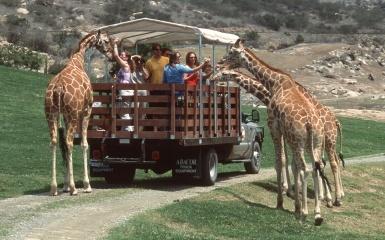 giraffe safari park