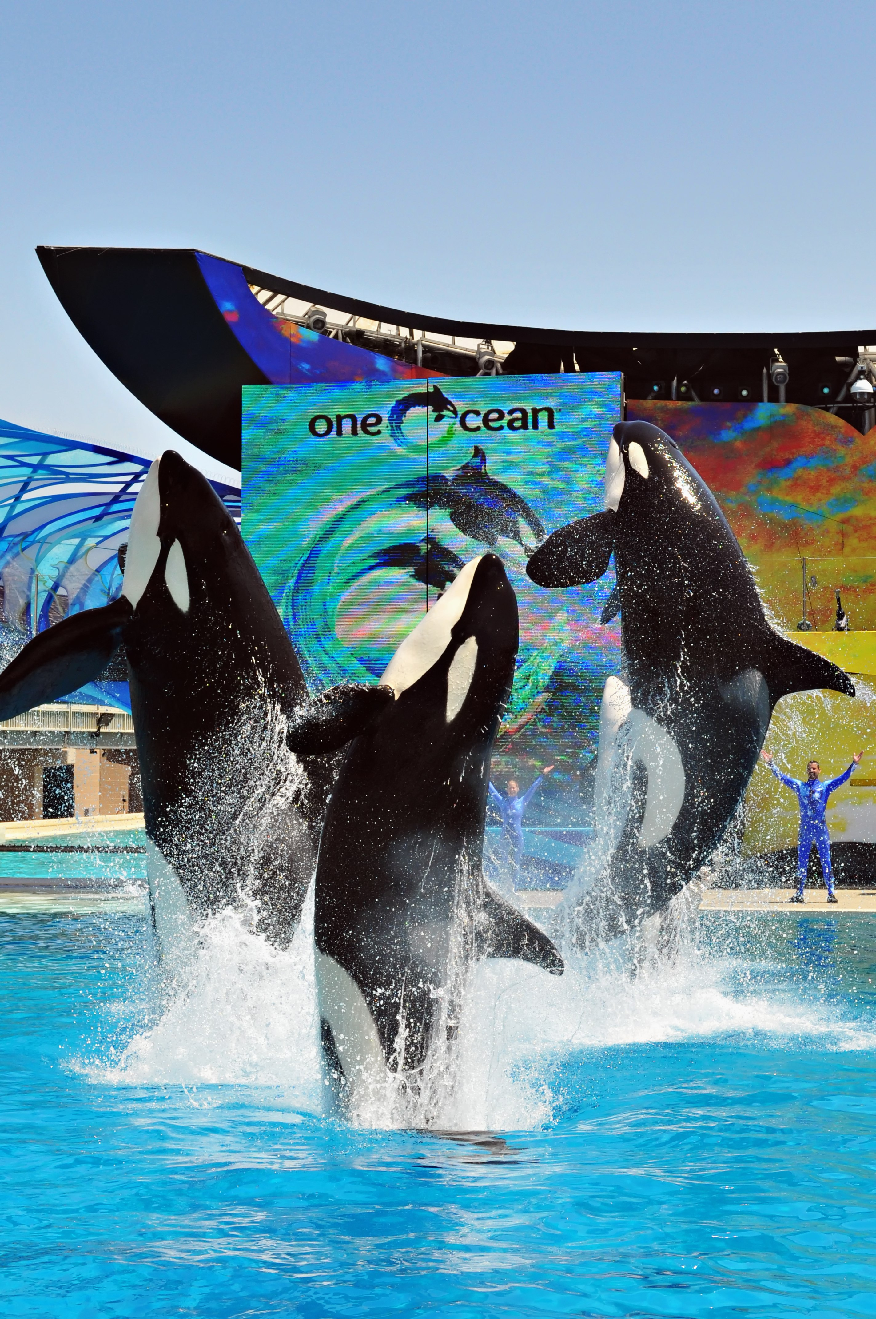 Visiting SeaWorld San Diego with Small Children