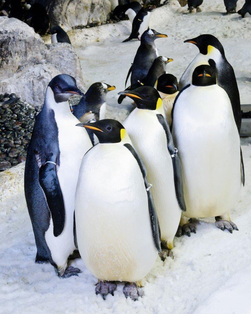 Penguin-Encounter