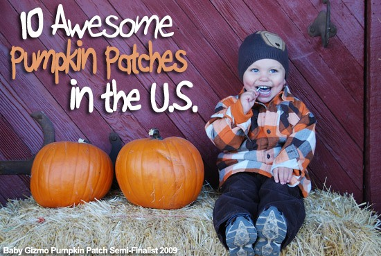 Best Pumpkin Patches