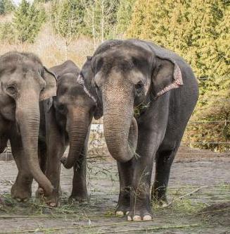 elephants at a zoo