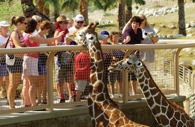 living desert with giraffes