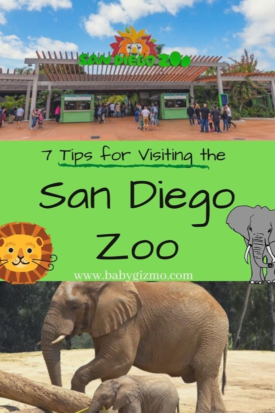 7 Tips to Maximize Your Trip To The San Diego Zoo
