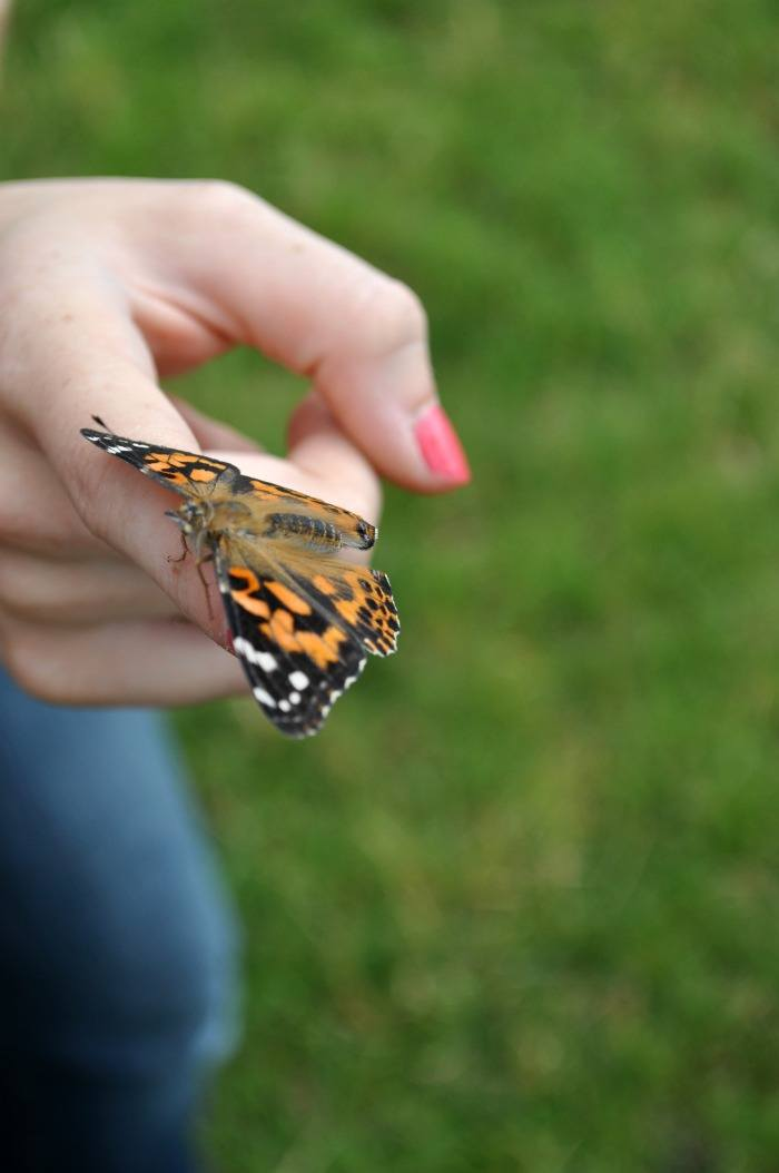 Hatch a Butterfly With Your Family
