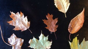 Little Artists – Rubbing and Tracing Fall Leaves