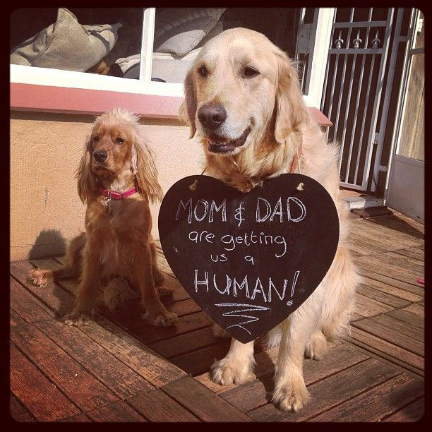 two dogs announcing baby
