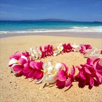 Hawaii Travel Reviews