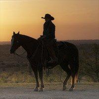 Texas Travel Reviews