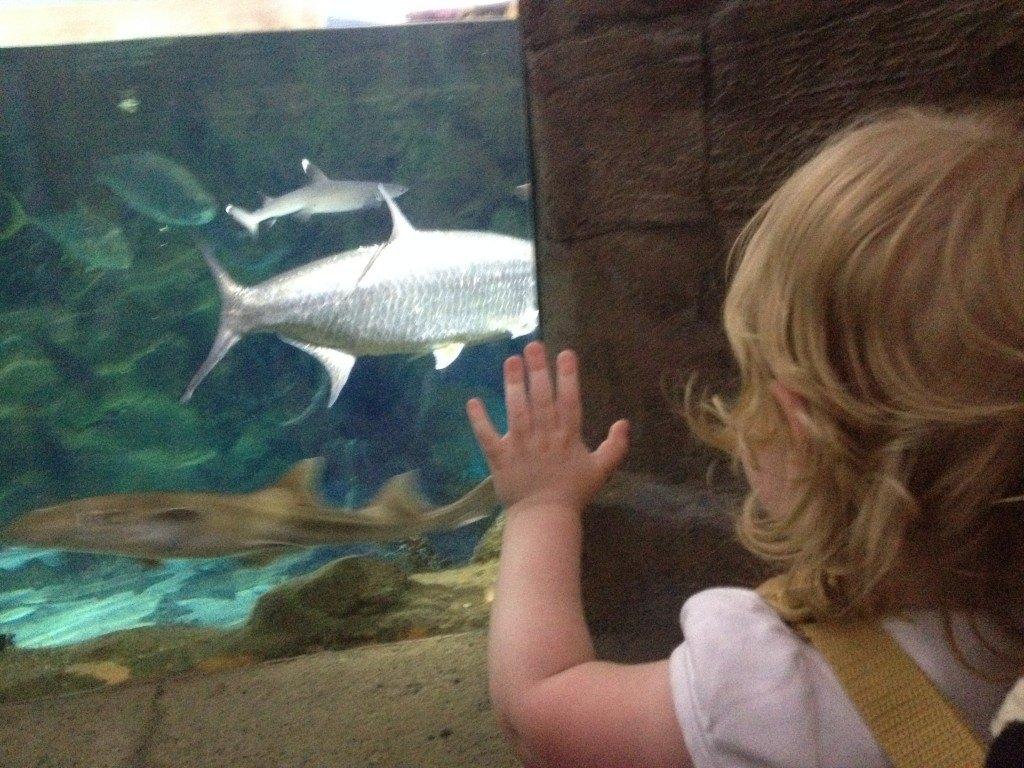 toddler looking at shark