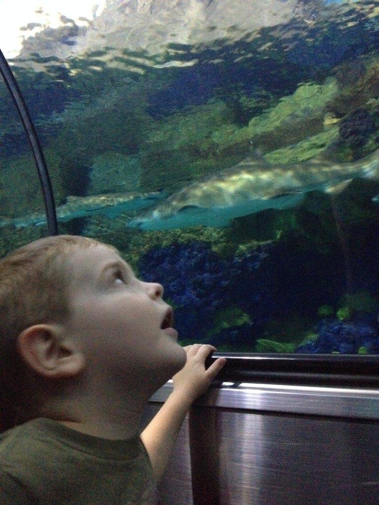 toddler looking at fish tank