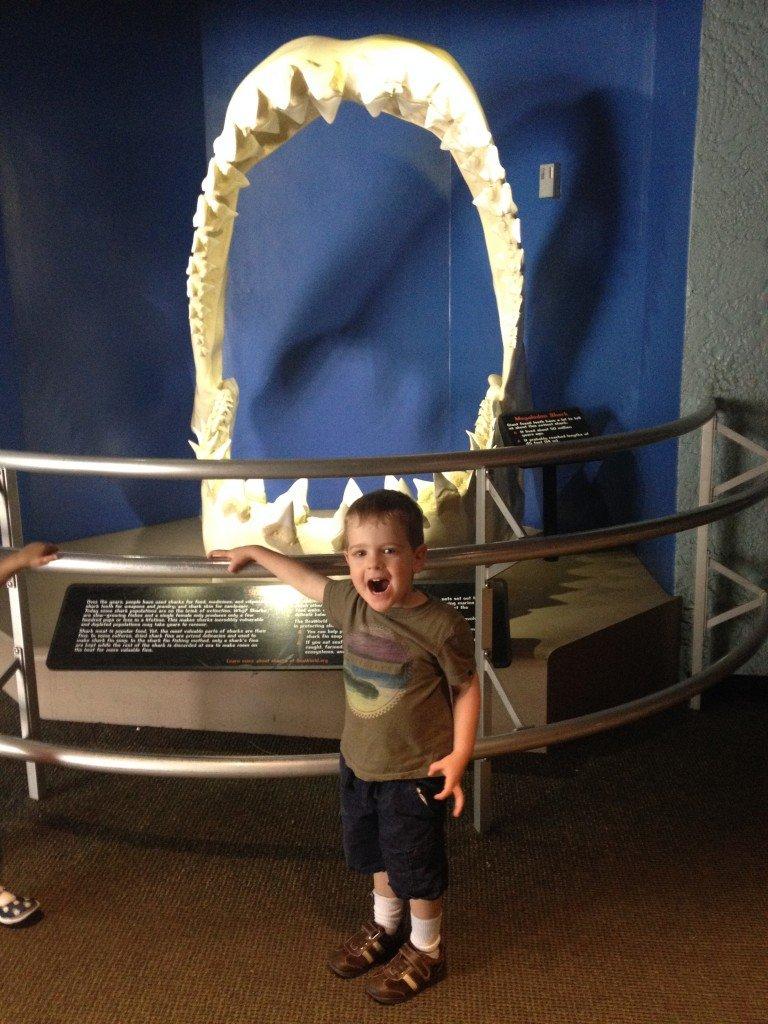 toddler looking at shark jaw