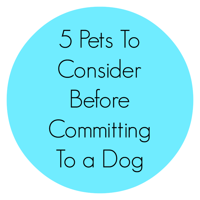 5 Pets To Consider Before Committing To a Dog