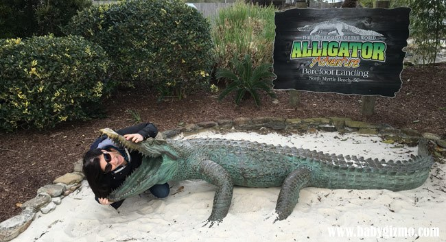 alligator adventure