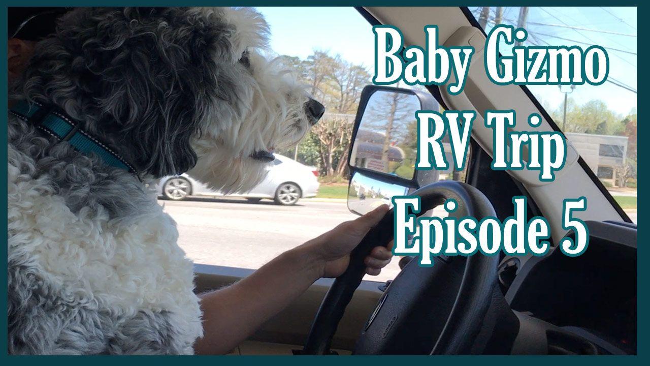 Baby Gizmo RV travel