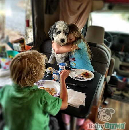 RV Travel with a Dog