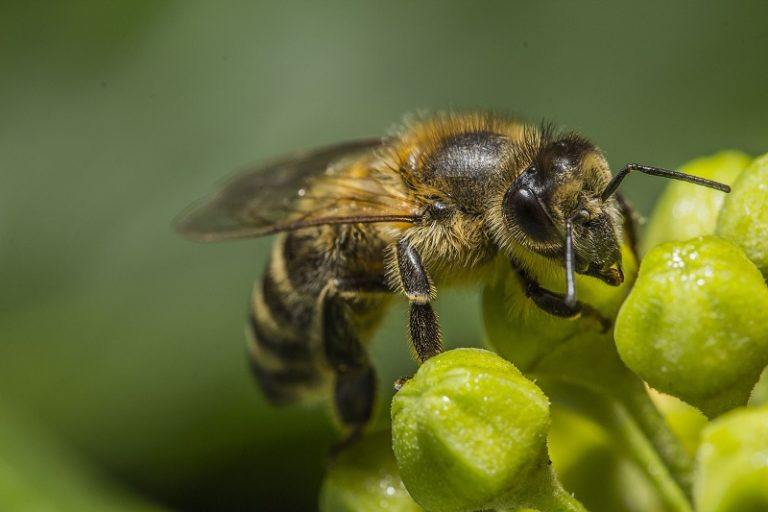 Tips: Treating a Bee Sting
