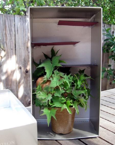 shoe box plant maze