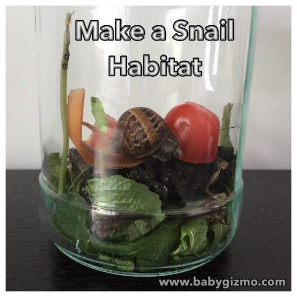How To Make A Simple Snail Habitat