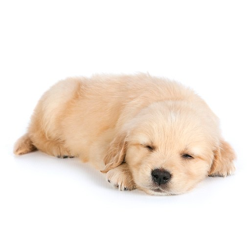 Why We Won't Get A Dog