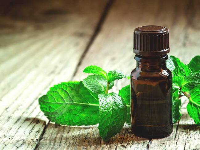 drying supply peppermint oil