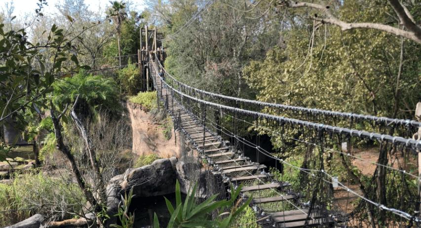Disney Animal Kingdom Rope Bridge
