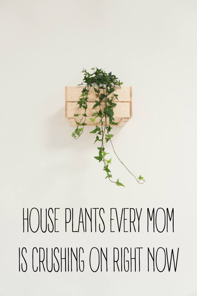 9 House Plants Every Mom Is Crushing on Right Now