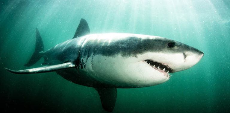 10 Gifts for the Shark Loving Fanatics in Your Life