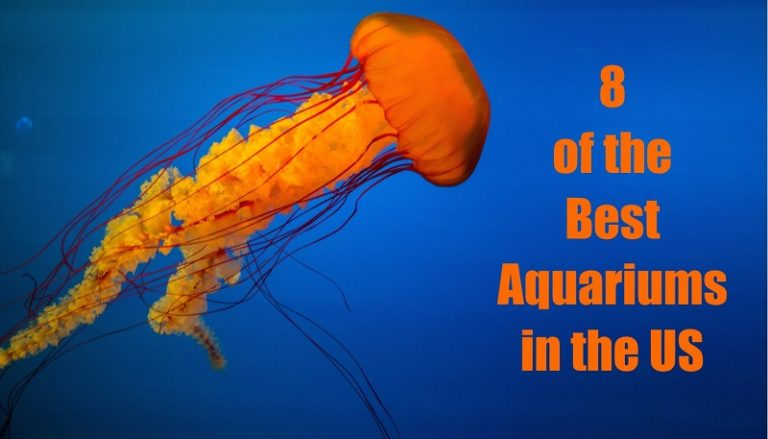 8 of the Best Aquariums in the US