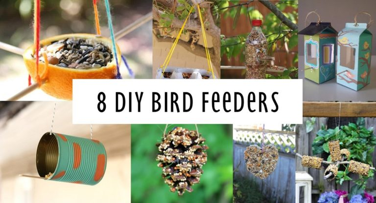 8 DIY Bird Feeders