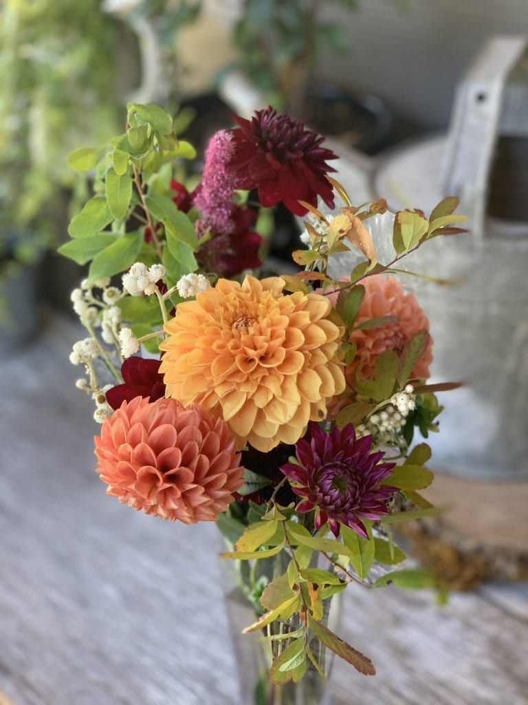 Start Your Summer Dahlia Garden This Month