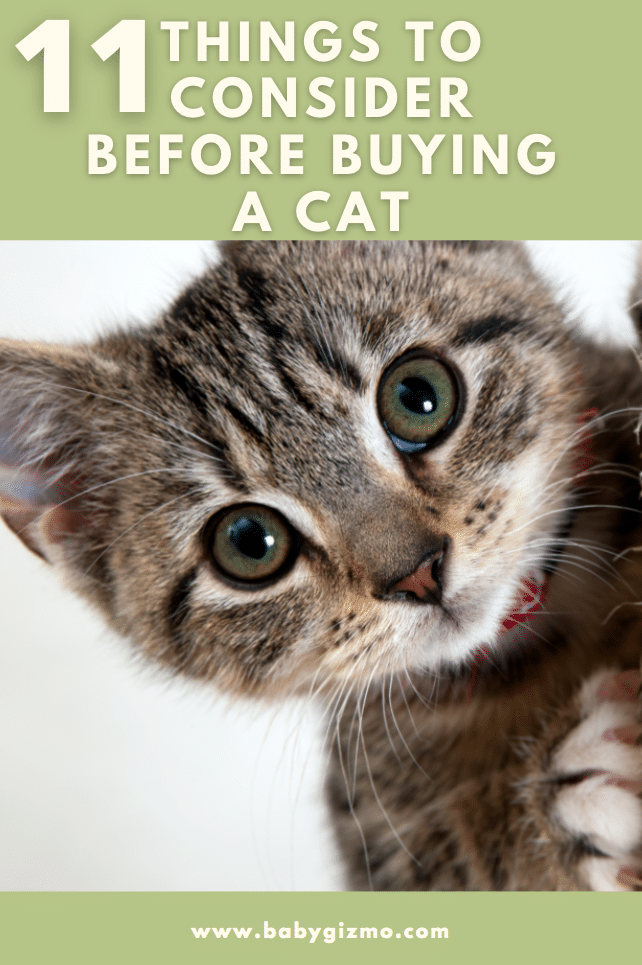 11 Things To Consider Before Buying A Cat
