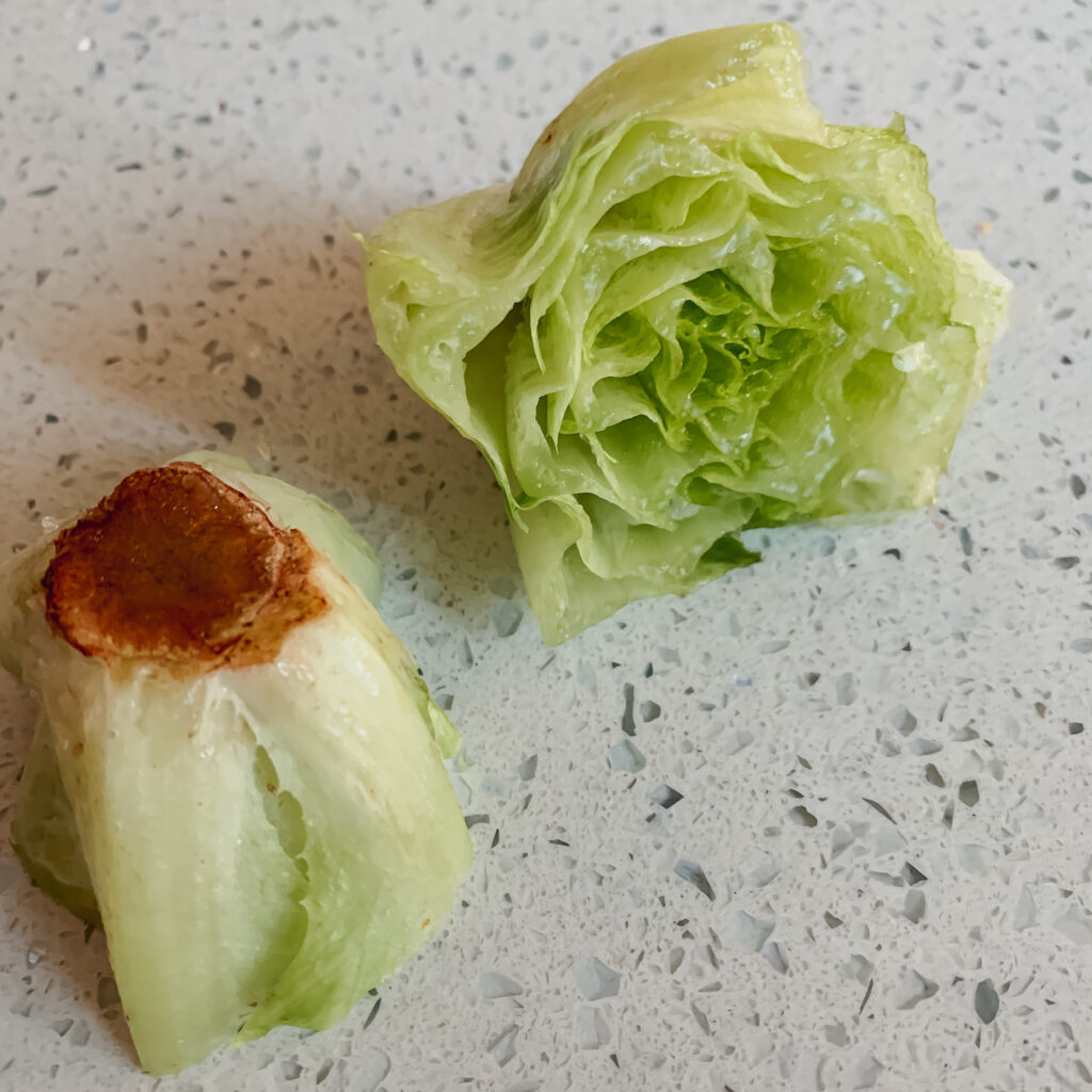 Lettuce Bottom Painting Project