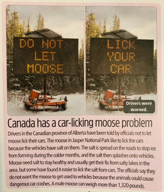 canada has moose licking problem article