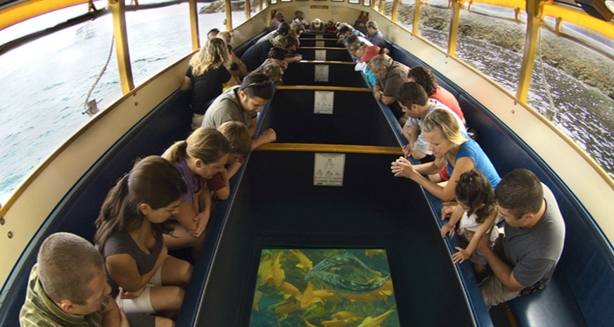 glass bottom boat tour in catalina island