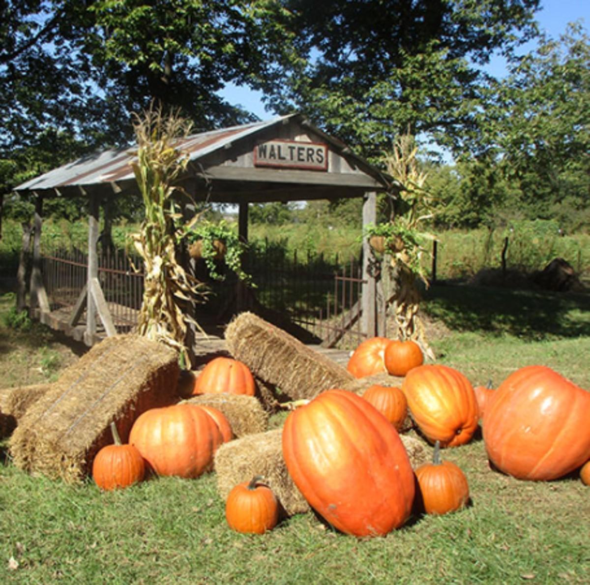 Valas Pumpkin Patch